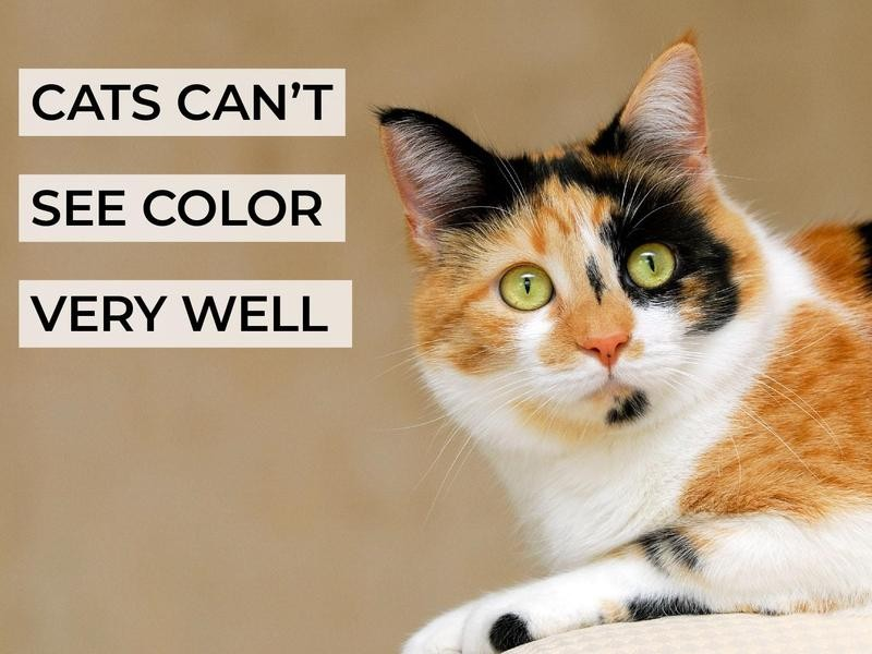 Cats Can't See Color Very Well