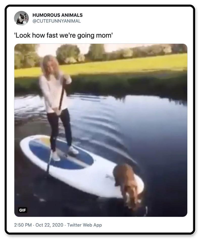 Dog on a paddleboard