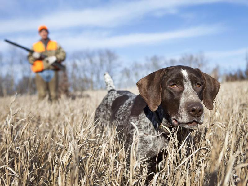 Hunting Prey