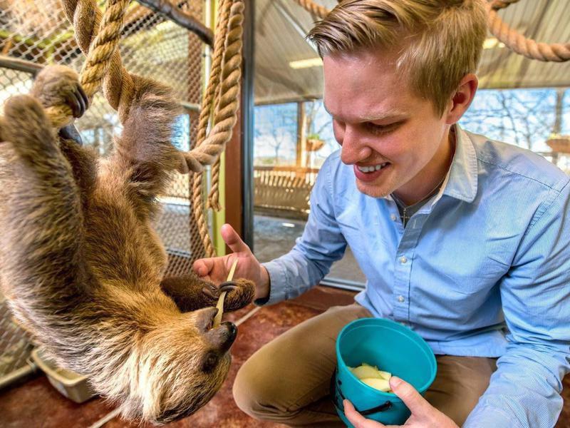Man feeding sloth