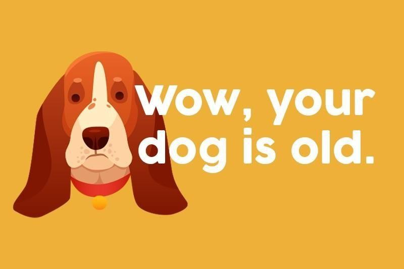 Wow, your dog is old.