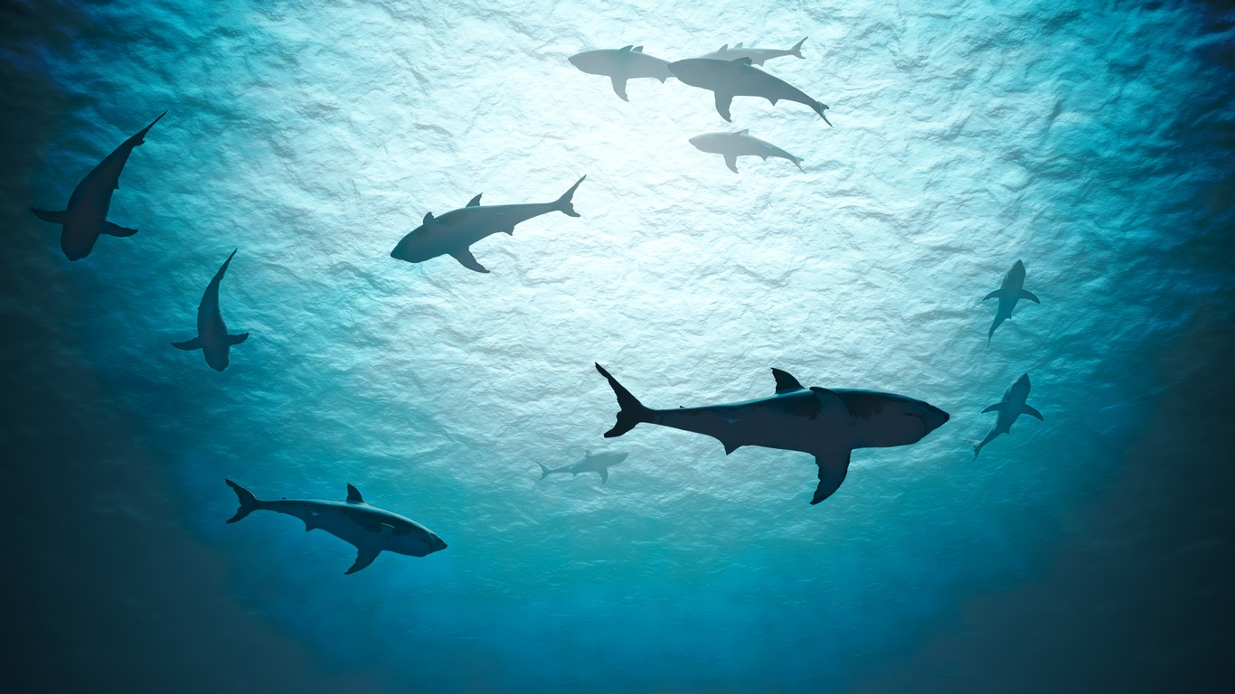 Sharks swimming in the ocean