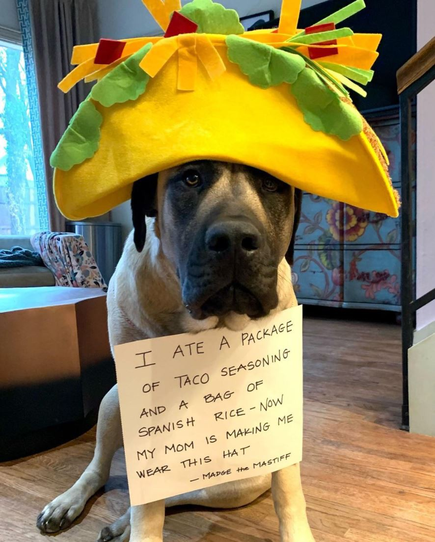 Dog with a taco hat