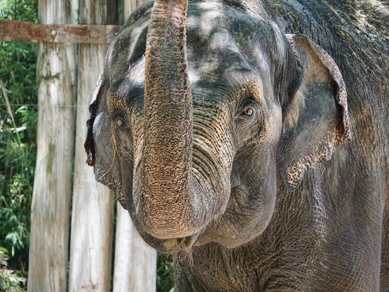 Elephant at the Fort Worth Zoo