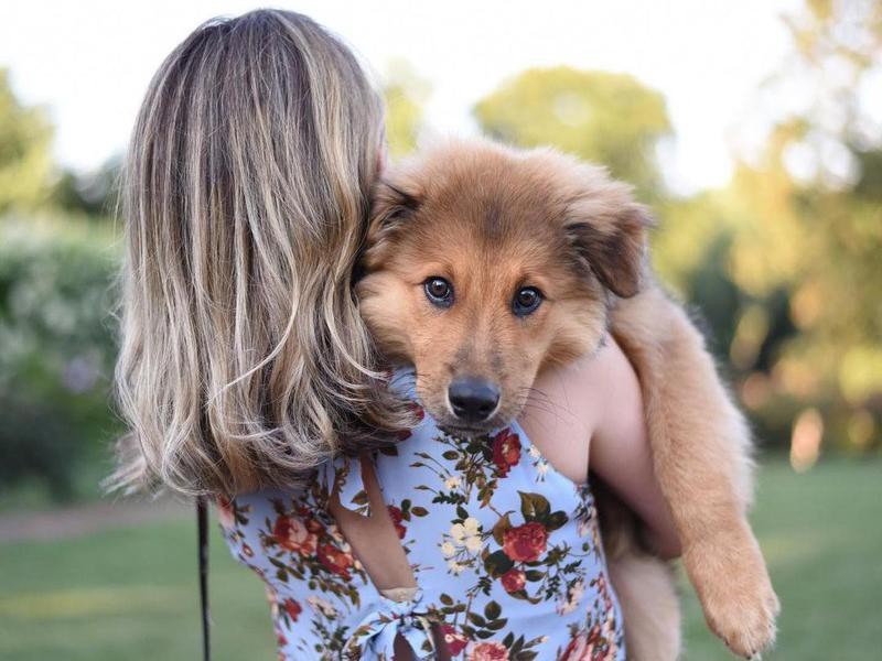 dog in owner's arms