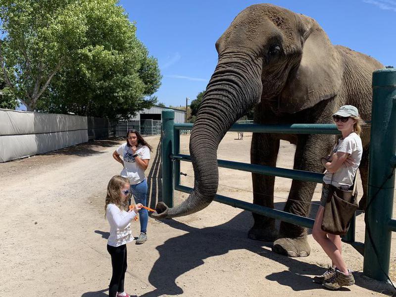 Elephant at Monterey Zoo