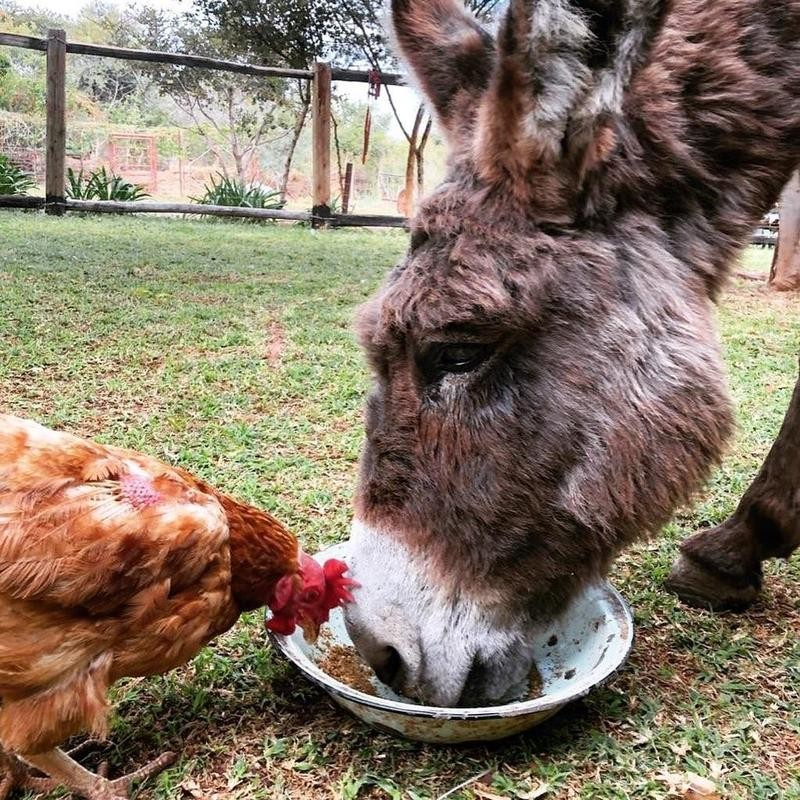 Horse and rooster