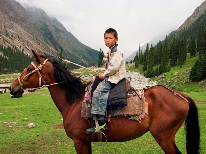Kyrgyz Horse
