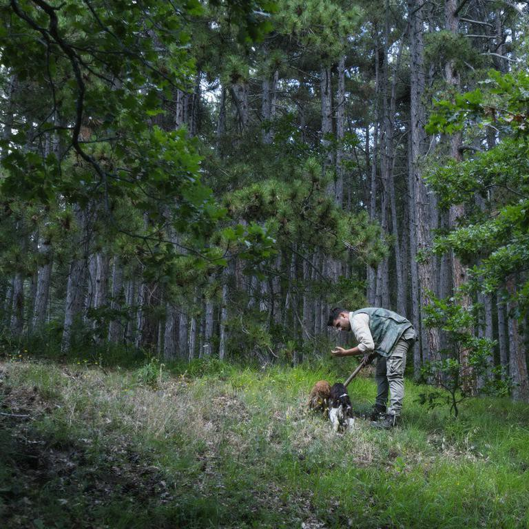Man collecting truffles with dogs in Italy