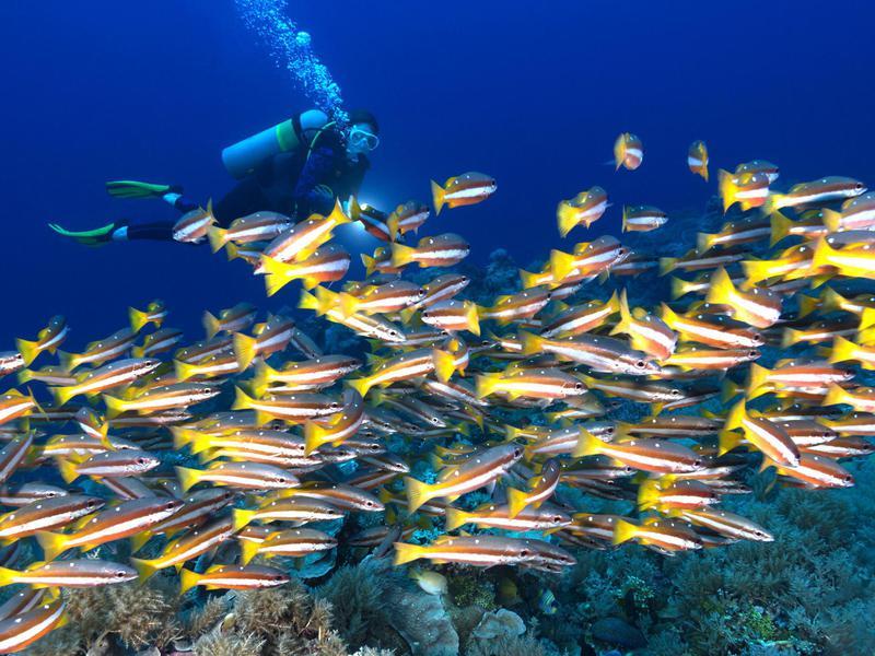Republic of Palau Diving