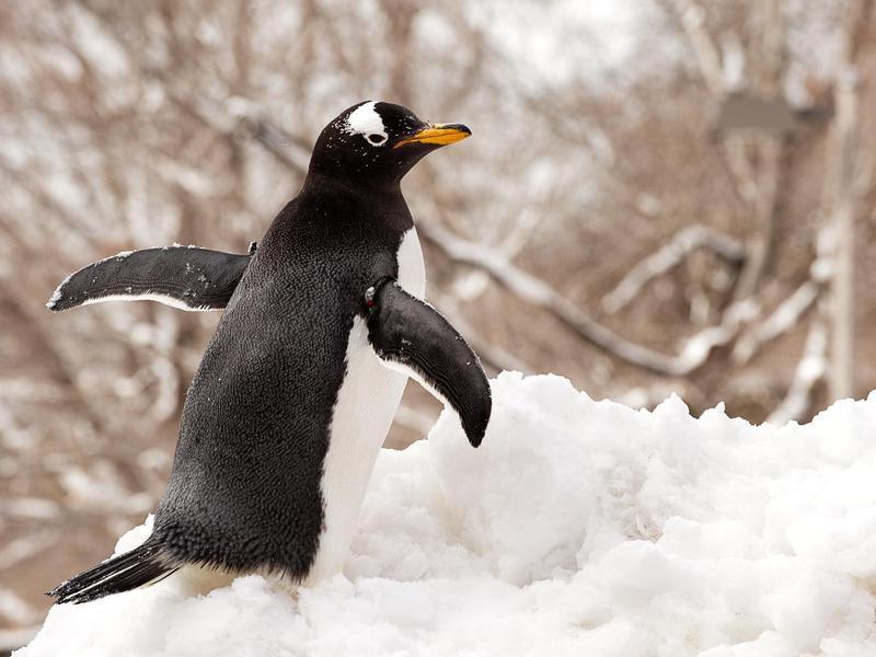 PPG Aquarium Penguin
