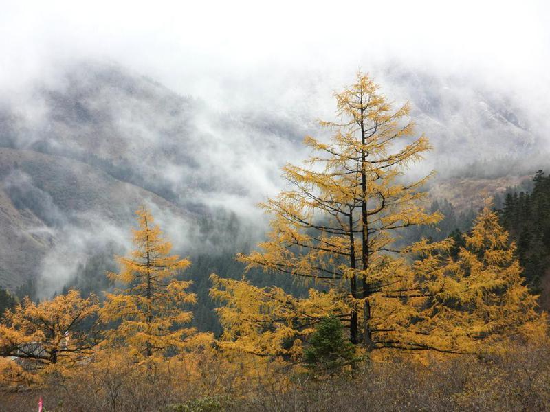 Jiuzhaigou Valley Forest