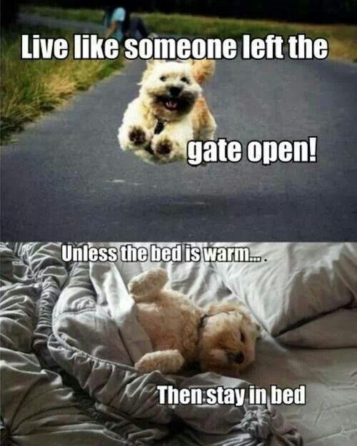 To play or to sleep