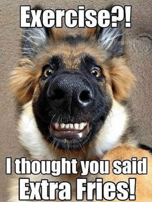 Dog likes fries