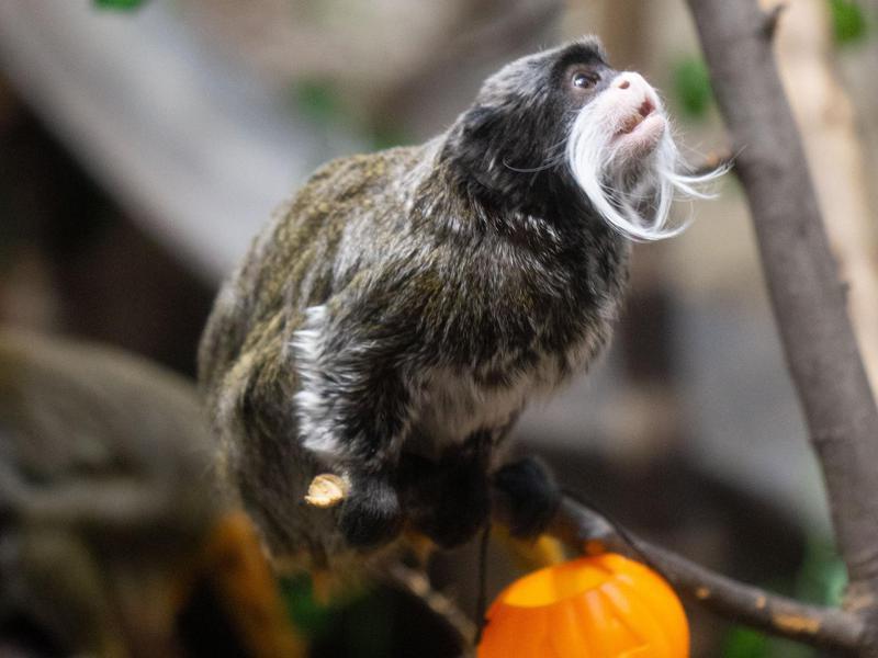 Small monkey in zoo