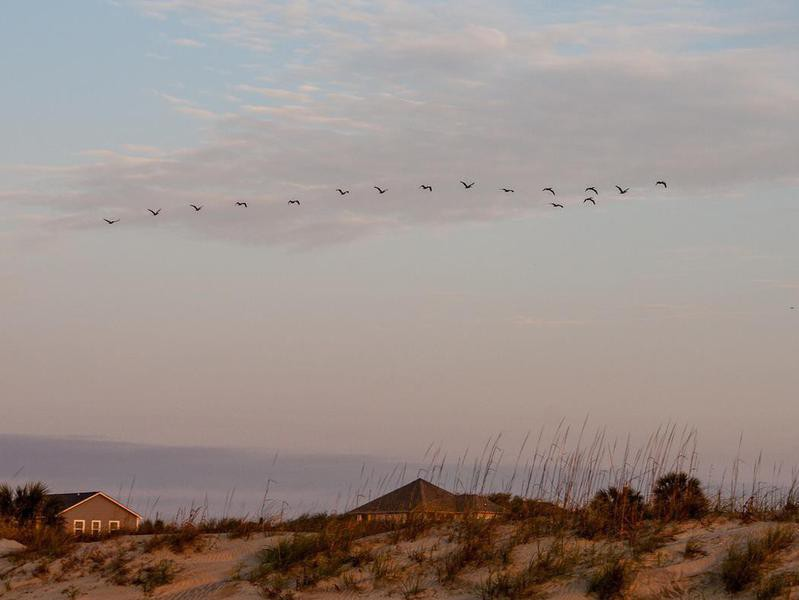Dunes at  Isle of Palms, South Carolina