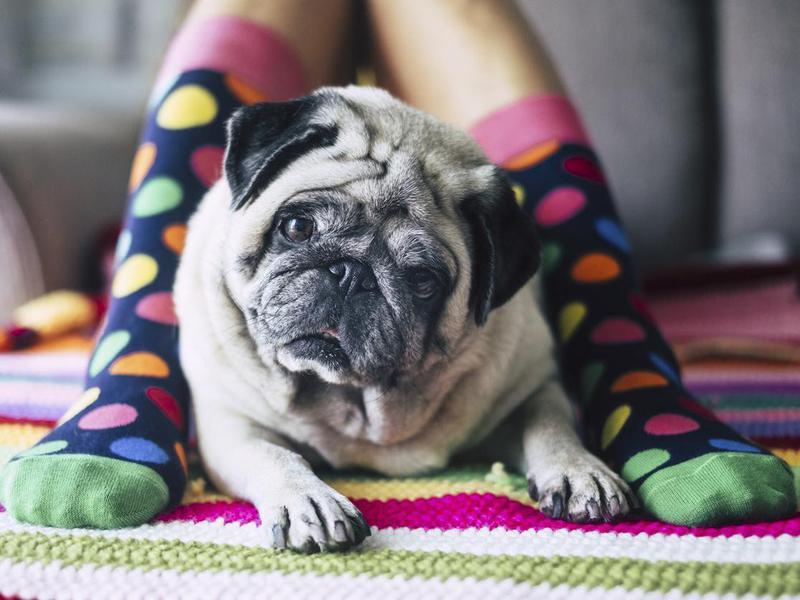 Desensitize Your Dog