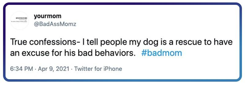 badly behaved dog