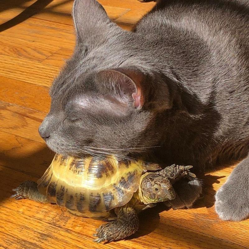 Cat sleeping on turtle
