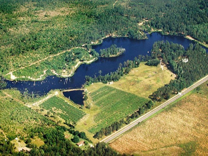 Boggy Creek Vineyard