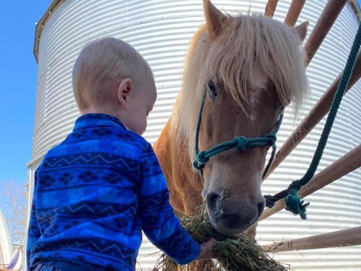 Child feeding quarter pony