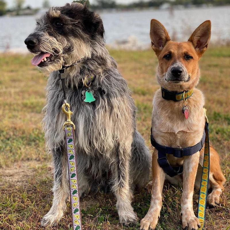 two mixed dogs