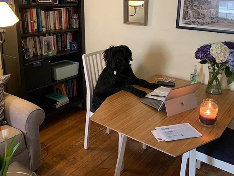 Dog working at a table