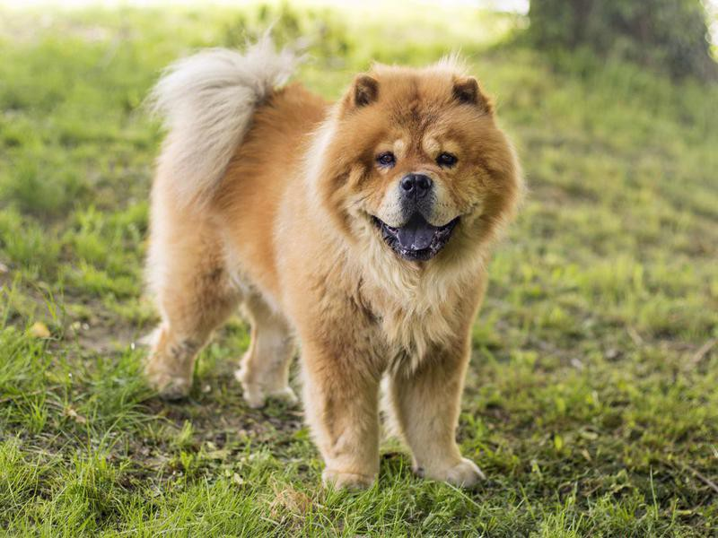 Some Dog Breeds Are More Aggressive Than Others — Debunked