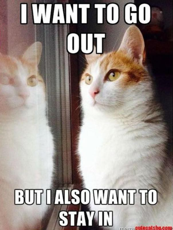 Cat decisions to make