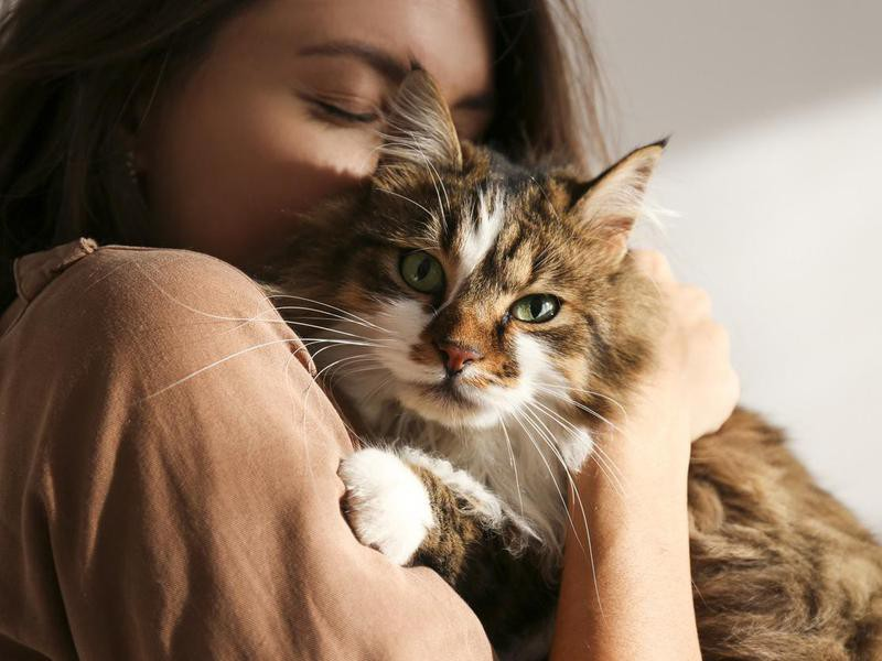 emotional support cat breeds