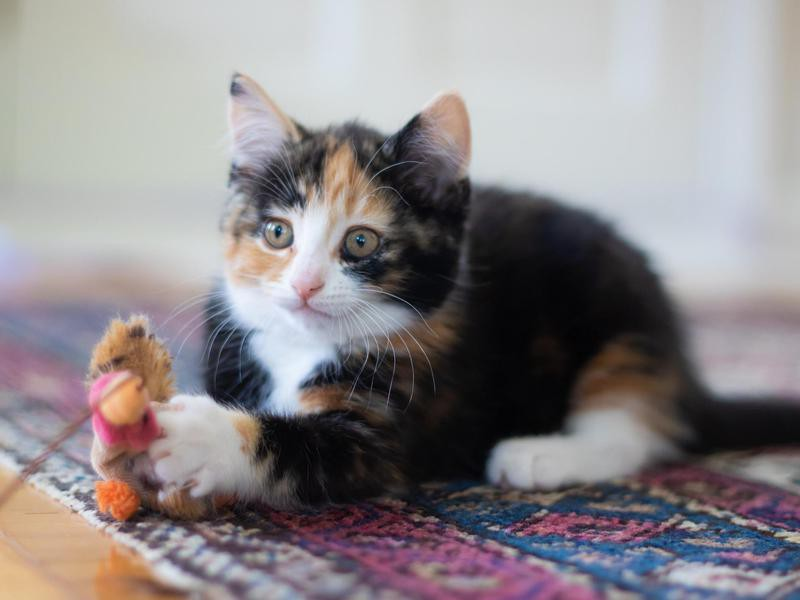 'Garfield' Boy Cat Name