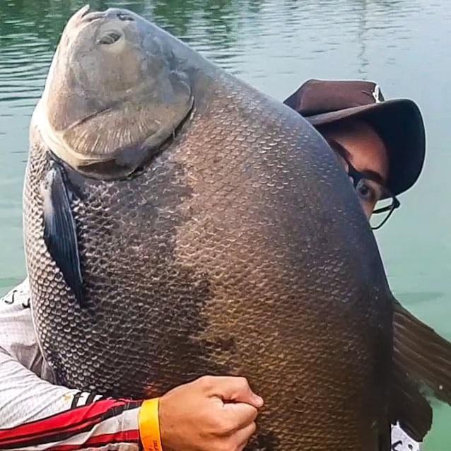 Big freshwater fish