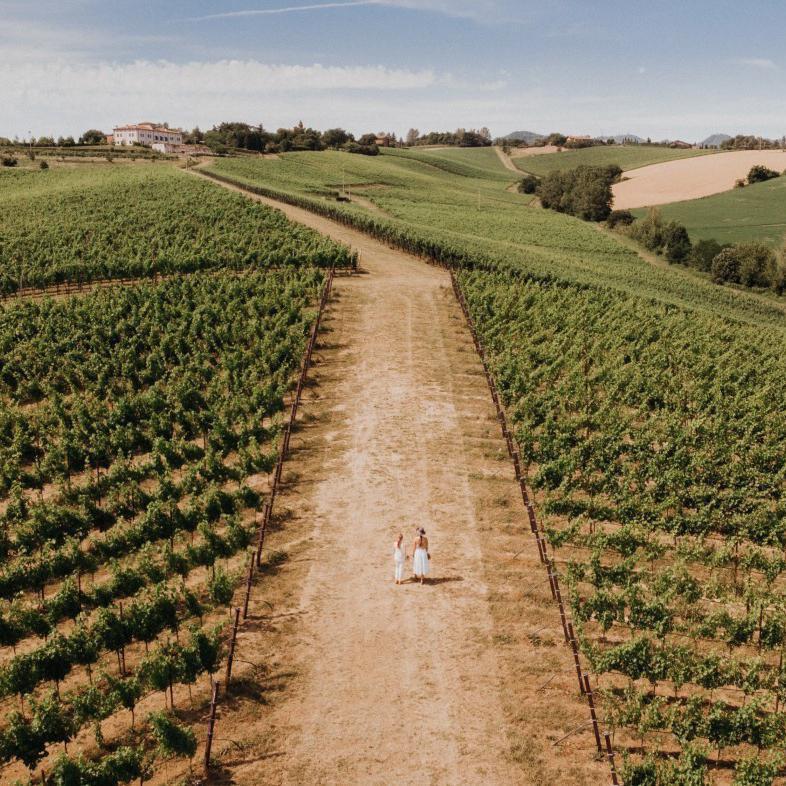Umberto Cesari vineyard