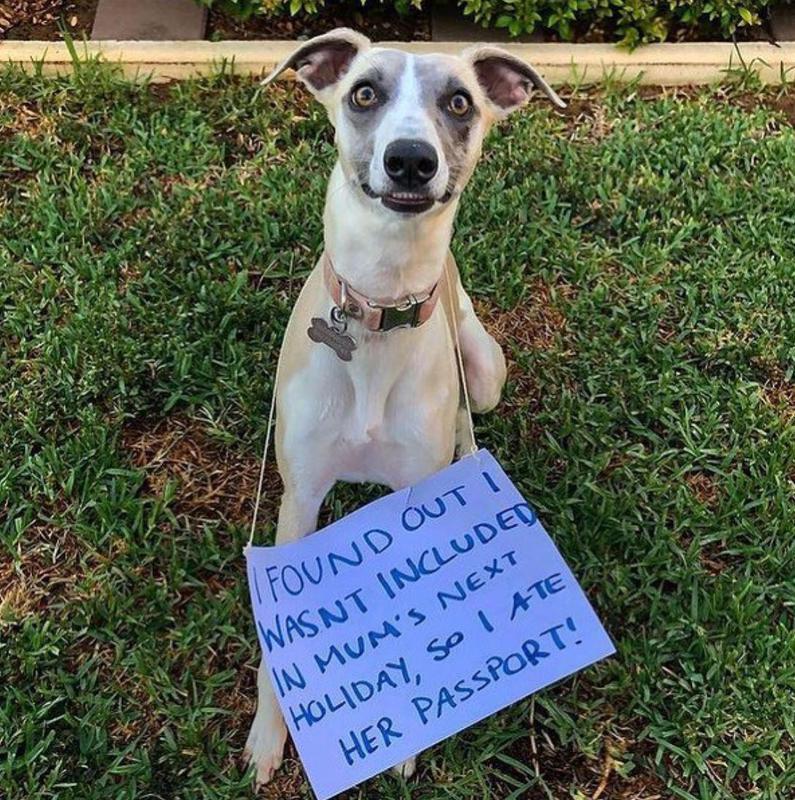 Dog at the passport