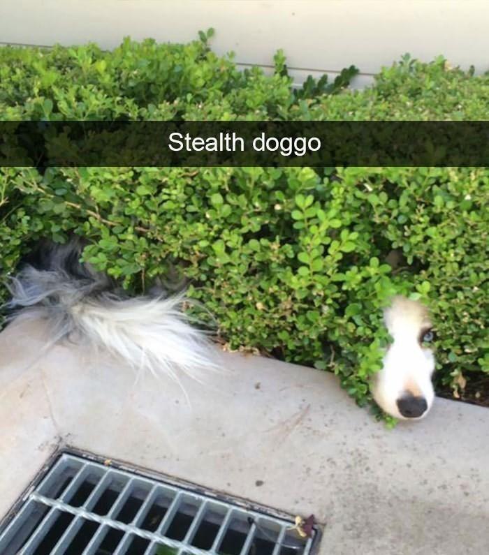 I spy a dog