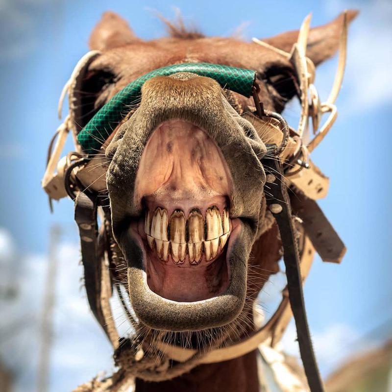 Horse smiling up close