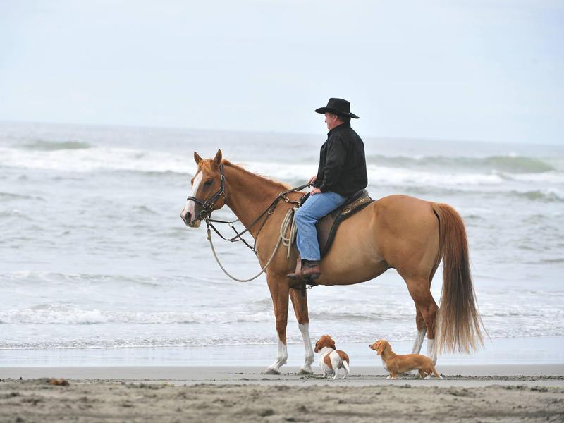 Ocean Acres Horse Hotel