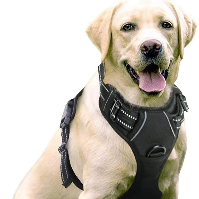 Large dog with harness