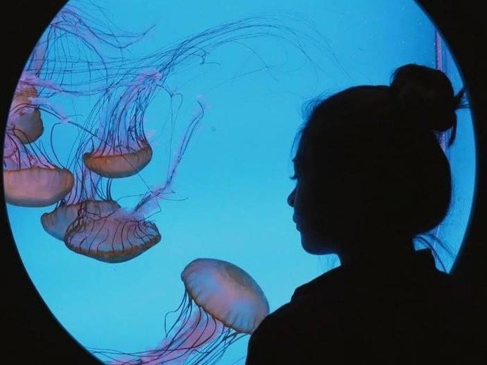 Downtown Aquarium Denver