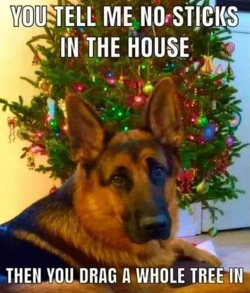 Dog has a question about the Christmas tree