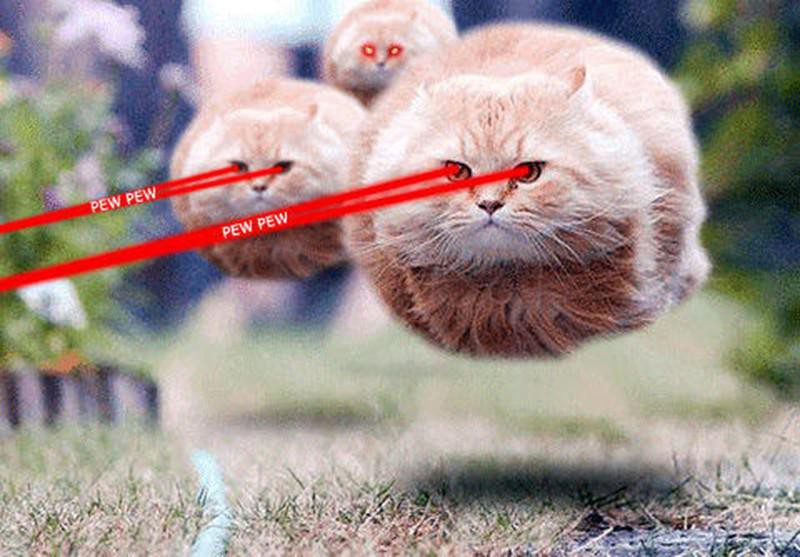 Cats superpowers with their eyes
