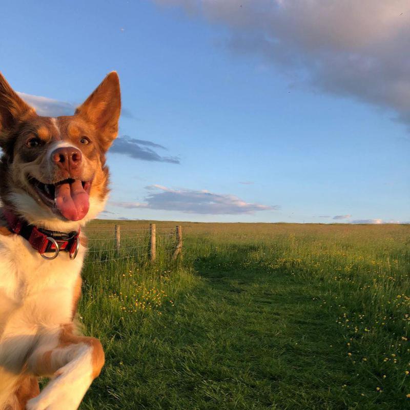 Dog photobombing landscape