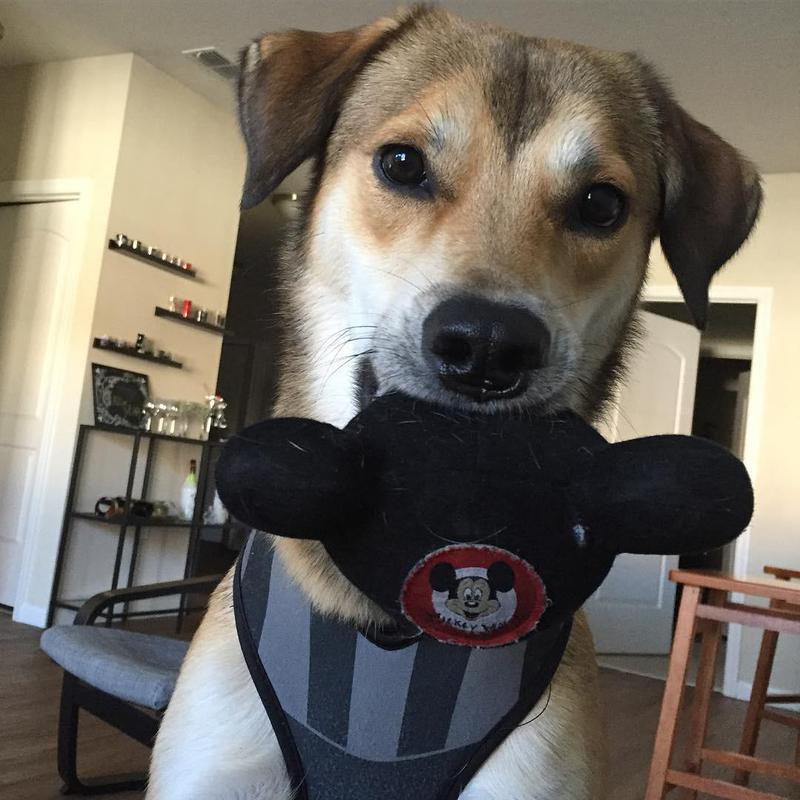 dog holding mickey mouse ears