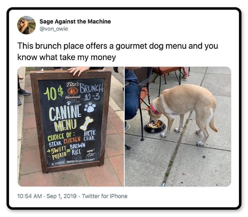 The dog deserves the best.