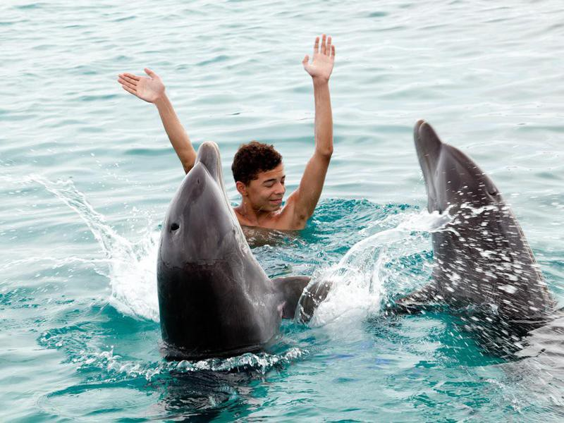 Dolphins Playing With a Teenager