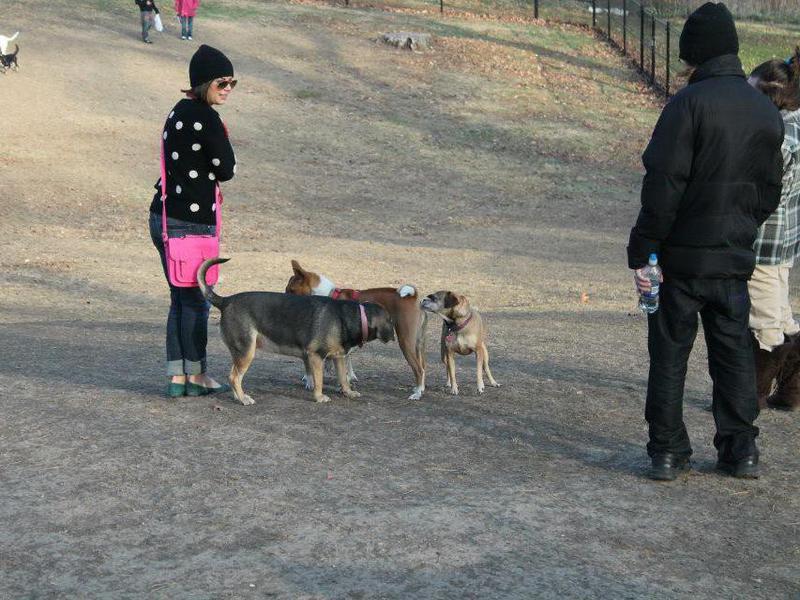 Hanscom Dog Park
