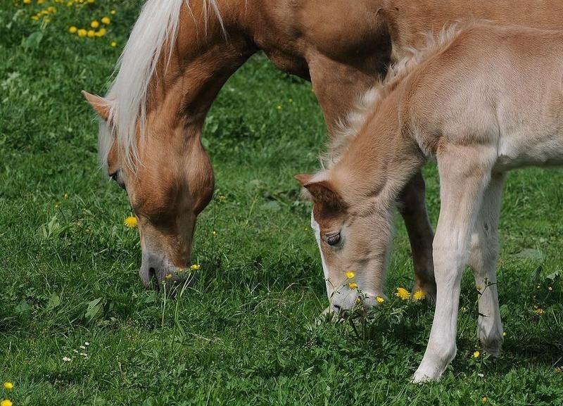 horse clone