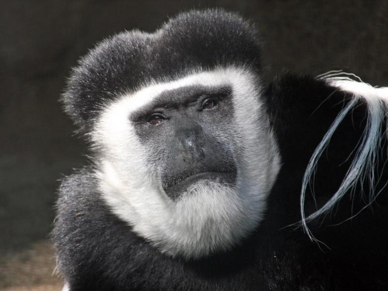 Gorilla World
