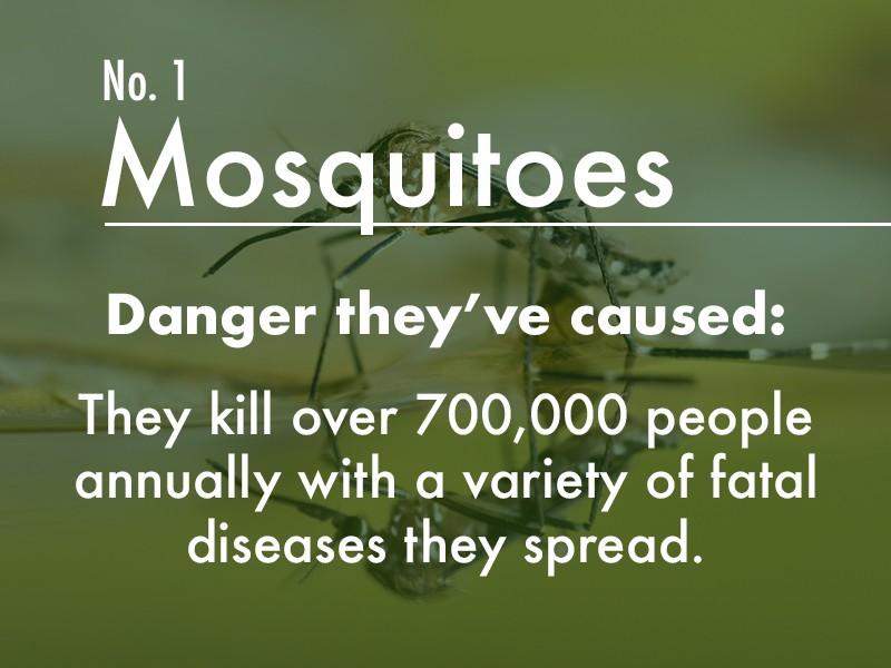 Mosquito dangers