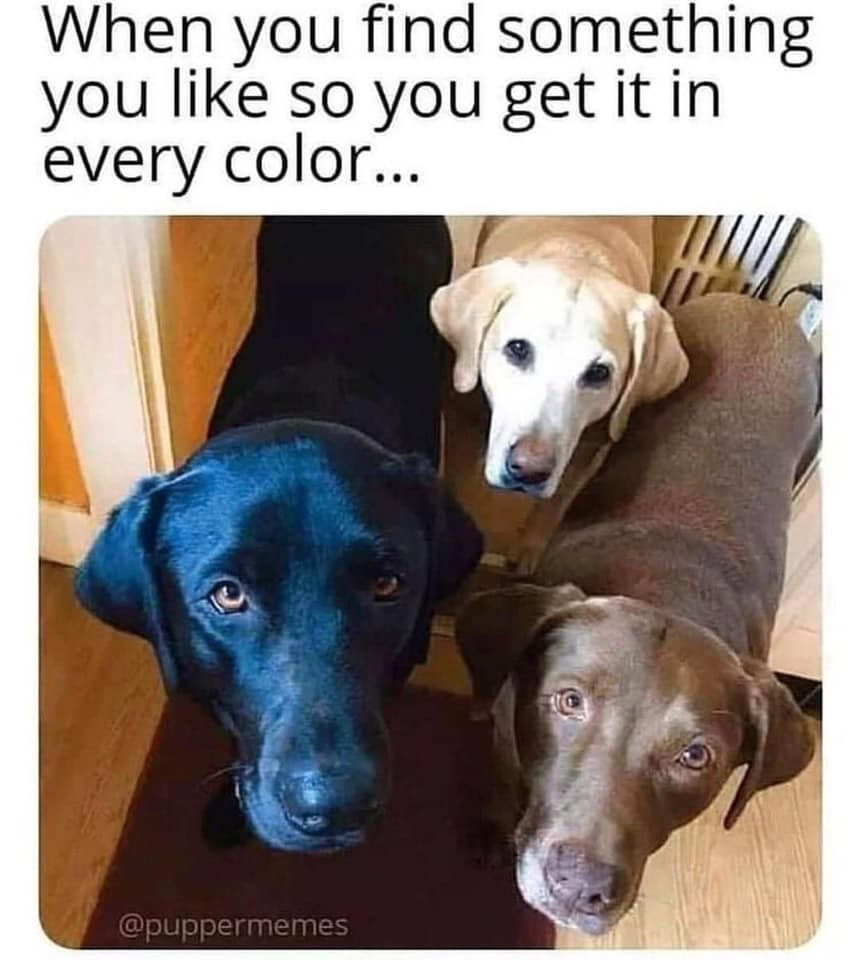 Pack of labs
